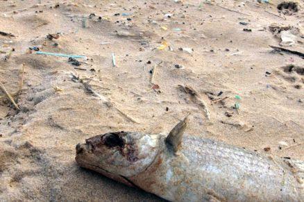 Plástico que mata peixes e aves marinhas.
