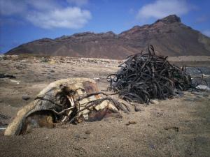 Tartaruga morta pela poluição em Cabo Verde